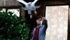 L'expo Harry Potter arrive en France