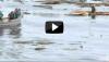 Vidéo tsunami Japon : regardez le sauvetage d'un miraculé en pleine mer!