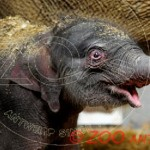 Photo Zoo d'Anvers