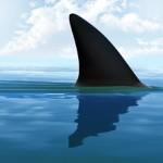 En 2015, les selfies ont plus tué que les requins